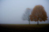 A rural southern Jersey view on a foggy autumn morning.