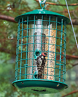 Downy Woodpecker. Image taken with a Leica T camera and 55-135 mm lens.