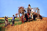 Old time harvest in period costume, Motherwell Homestead National Historic Site, Saskatchewan