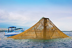 Kona Blue Fish Farms workers feeding Kona Kampachi, Hawaiian yellowtail, aka almaco jack or kahala, Seriola rivoliana, in raised 3,000-cubic-meter submersible fish pens installed in open ocean just off Kona Coast, Big Island, Hawaii, Pacific Ocean