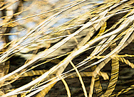 Slender pre-spring willow strands are beginning to thicken.    Their graceful movement in the wind is both enlivening and restful to winter weary eyes.