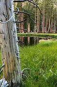 Bog along Horse Creek, Hoover Wilderness, Toiyabe National Forest, California