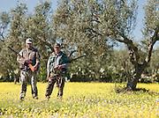 Hunters in a Olive grove outside mahdia, Tunisia