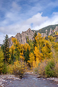 Narrowleaf Cottonwood, Aspen, WIllow, Firs, on the East Fork Cimarron River, Uncompahgre Mountains, Uncompahgre National Forest, Colorado