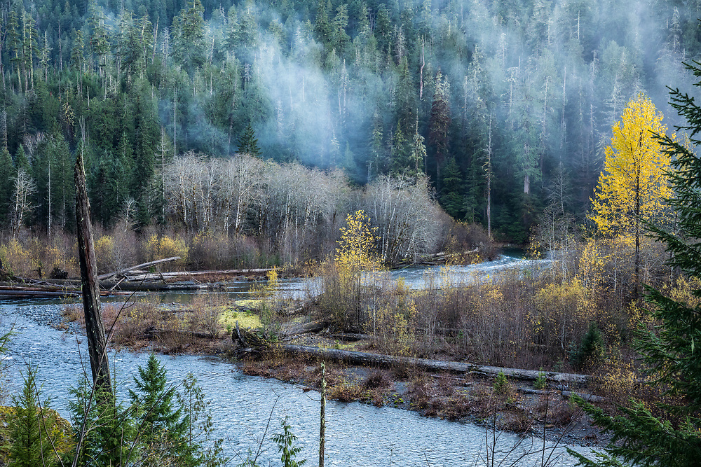 Forest and Skokomish river, Staircase Rapids area of Olympic National Park, Washington, USA.