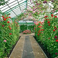 Belgian Royal Greenhouses, Laeken, Brussels Stock Photos