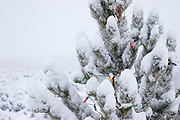 Outdoor tree with christmas lights in snow in New Mexico