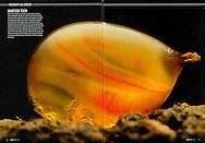 Publication: KIJK Magazine (Netherlands) No.11/2011,  Photography by Heidi & Hans-Jürgen Koch/heidihanskoch.com
