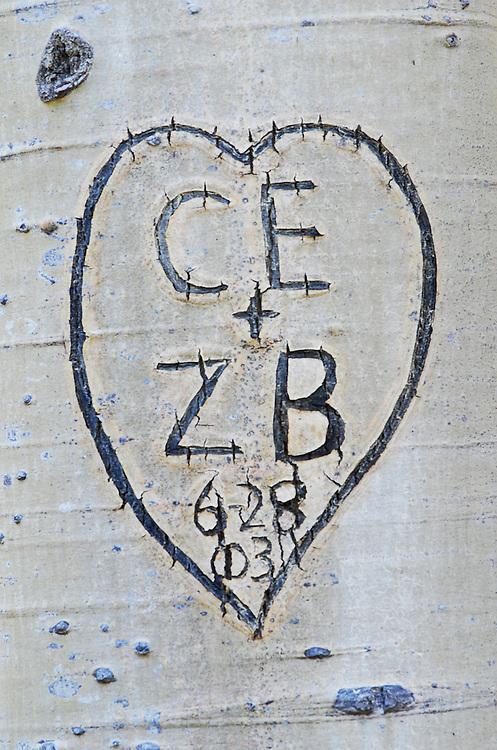 Graffiti carved into aspen tree trunk in Northern Arizona.
