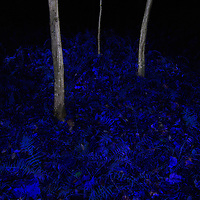 """""""Flood Plain"""". Floodplain forest along the banks of Difficult Run in Difficult Run Stream Valley Park in Oakton, VA. This image is part of my project """"Difficult Run: Dreamscapes and Nightmares Along Four Northern Virginia Streams""""."""