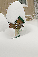 Snow covered bird house