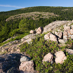 Sheep Laurel and granite on Bald Mountain in Maine's Acadia National Park.  Sargent Mountain is in the distance.  Mount Desert Island.
