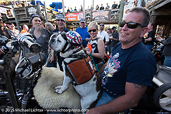 "Leo Ashton and his 9-year old, 85 pound English Bulldog ""Diesel,"" who has ridden 60,000 of the 110,000 miles Leo has on his Harley-Davidson ""Springer,"" here getting lots of attention at the Iron Horse Saloon during Daytona Beach Bike Week. Ormond Beach, FL, USA. Sunday March 8, 2015.  Photography ©2015 Michael Lichter."