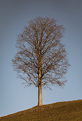 THEMENBILD - ein entlaubter Baum auf einer Anhöhe vor blauem Himmel an einem sonnigen Herbsttag, aufgenommen am 10. November 2018, Saalfelden am Steinernen Meer, Österreich // a leafless tree on a hill against a blue sky on a sunny autumn day on 2018/11/10, Saalfelden am Steinernen Meer, Austria. EXPA Pictures © 2018, PhotoCredit: EXPA/ JFK