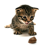 Cutout of a one week old curious kitten and snail on white background