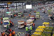 flower tranport inside the large warehouse hall of FloraHolland Aalsmeer Netherlands