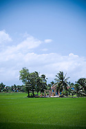 Green rice field with a cottage among trees. Khanh Hoa countryside, Vietnam, Asia