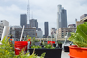 Self-watering gardens on the roof of LA CAN (Los Angeles Community Action Network), Downtown Los Angeles, CA