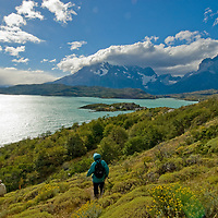 Hikers descend a hill above Lake Pehoe, the Horns of Paine, and the Towers of Paine, Torres del Paine National Park, Chile.