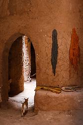 Cat running through doorway in kasbah in ancient ksar (old city) of Aït Benhaddou, Morocco