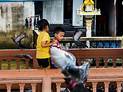 03 OCTOBER 2018 - BANGKOK, THAILAND: Pigeons on Chao Phraya River piers in Bangkok. Bangkok authorities are trying the get the pigeon population under control. They've imposed a fine of 25,000 Baht (about $750US) and/or three months in jail for feeding pigeons.    PHOTO BY JACK KURTZ