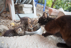 Wild Cats, Marie's House