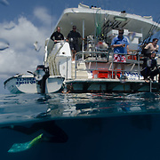 A split shot with bottom of frame underwater, as swimmers return back to the MV Night Crossing on Australia's Great Barrier Reef.