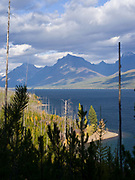 Northwest shore of Lake McDonald fifteen years after the stand replacing Roberts Fire, Glacier National Park, Montana.
