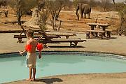 Wild elephants roam freely, enjoying drinking water supplied by Elephant Sands lodge near Nata, Botswana. Image by Greg Beadle
