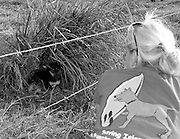 Katie Block attempts to rescue a fearful abandoned dog.