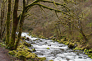 Moss covers trees and rocks on Tanner Creek, on the trail to Wahclella Falls, Columbia River Gorge National Scenic Area, Oregon, USA.
