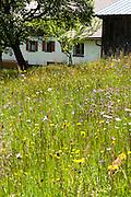 Blumenwiese, Bischofsreuter Waldhufen, Bischofsreut, Bayerischer Wald, Bayern, Deutschland | meadow, Bischofsreuter Waldhufen, Bischofsreut, Bavarian Forest, Bavaria, Germany