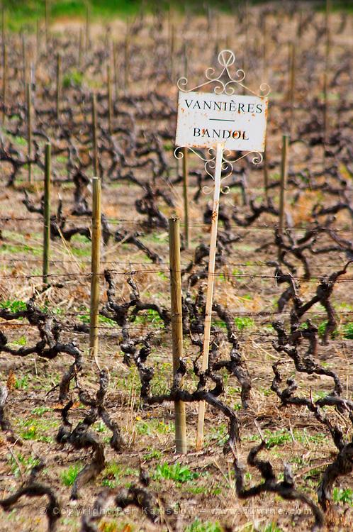 View over the vineyard in spring, sign with text Vannieres and Bandol Grape variety Cinsault and Mourvedre Chateau Vannieres (Vannières) La Cadiere (Cadière) d'Azur Bandol Var Cote d'Azur France