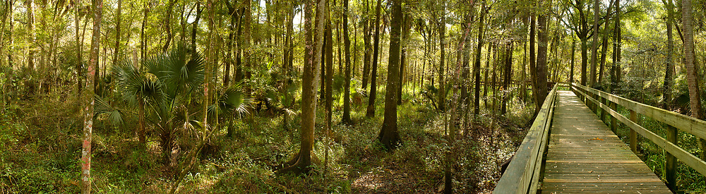 Hillsborough River State Park: Long boardwalk on the far right of a forest in a park close to Tampa, Florida. RAW to Jpg