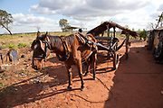 Tired looking horse attached to a cart in a Guarani village. The Guarani are one of the most populous indigenous populations in Brazil, but with the least amount of land. They mostly live in the State of Mato Grosso do Sul and Mato Grosso. Their tradtional way of life and ancestral land is increasingly at risk from large scale agribusiness and agriculture. There have been recorded cases and allegations of violence between owners of large farms and the Guarani communities in this region.