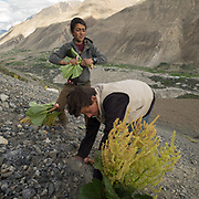 Boys going to look for Rhubarb, to eat it.<br />  Life in Chipursan valley. It is the most Northwestern part of Pakistan, bordering Afghanistan and China. The people speak the Wakhi Language and belong to the Ismaili sect of Islam.