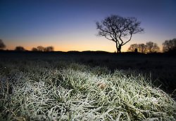 © Licensed to London News Pictures. 12/12/2017. Epsom, UK. Frosty grass at first light on Epsom Downs after a night of freezing sub zero temperatures. Photo credit: Peter Macdiarmid/LNP
