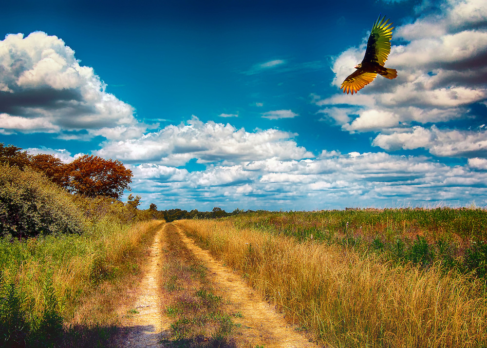 An Autumn Scene Along The Hiking Trail At Busch Wildlife in Saint Charles, Missouri.