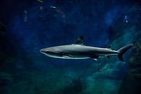 Aquarium de Lyon, requin.<br /> Shark