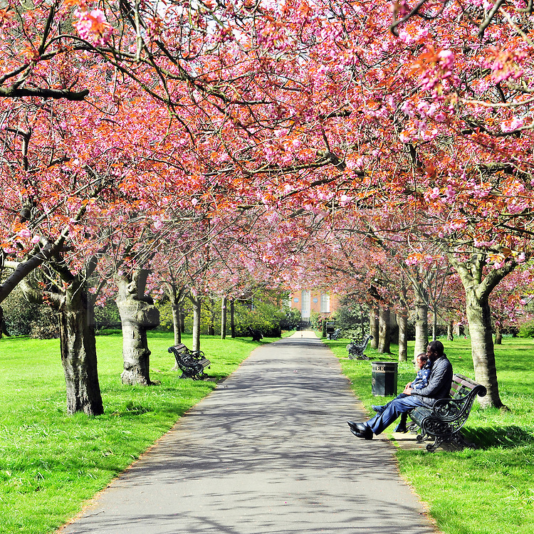 © Licensed to London News Pictures. 29/04/2016<br /> Blossom on the trees in Greenwich Park.<br /> Blue sky and sun today in Greenwich Park, Greenwich, London.<br /> <br /> (Byline:Grant Falvey/LNP)