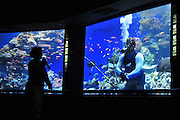 Israel, Eilat, The underwater observatory Built over a coral reef. Diver feeds the fish. Feeding the fish attracts fish for better viewing pleasure