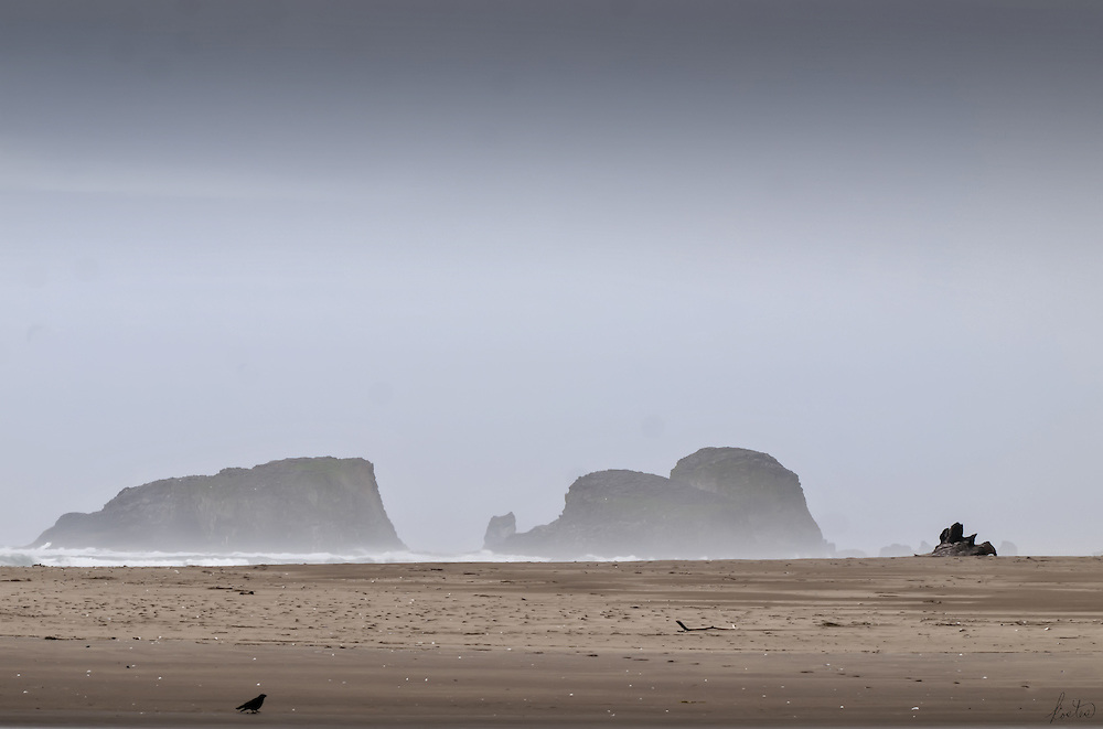 A lone crow walks the vast ocean beach on a very foggy day. The limited palette and the lone crow add a sense of mystery.