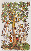 Adam and Eve and legless snake under an apple tree, in the Garden of Eden from a herbal book by Adam Lonicer published in 1557 and reprinted in 1582