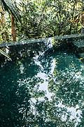 Jungle reflected in villa swimming pool