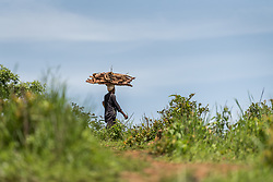 4 June 2019, Meiganga, Cameroon: A man carries firewood back to the Ngam refugee camp. Supported by the Lutheran World Federation, the Ngam refugee camp, located in the Meiganga municipality, Adamaoua region of Cameroon, hosts 7,228 refugees from the Central African Republic, across 2,088 households.