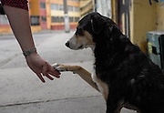 A street dog offers his hand in a freindly greeting.