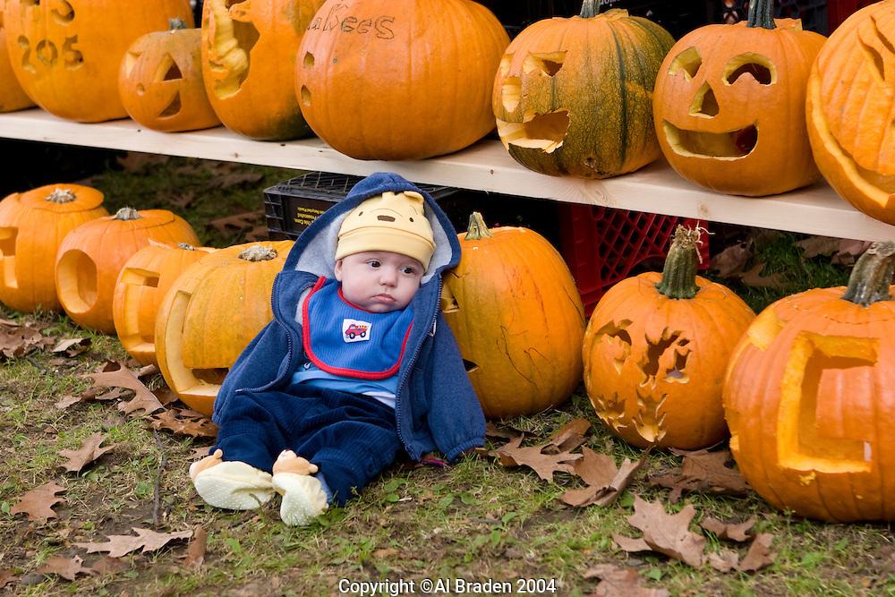 Young Pumpkin with Jack o Lanterns, Keene Pumpkin Festival