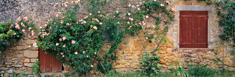 A pink rosebush covers a stone wall in Lourmarin in Provence in southern France.