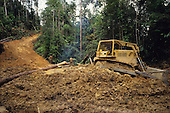 Bulldozer Logging Deforestation