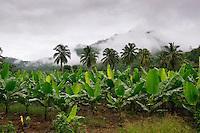 Jungle, rainforest,  and banana trees Kanchanaburi Province, Thailand